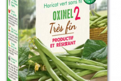 Oxinel 2 - Un haricot hautes performances