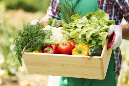Five tips for a successful organic vegetable garden