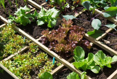 How do I delineate a vegetable garden?