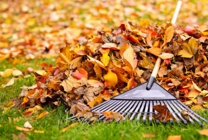 Autumn gardening: how to pick up and use dead leaves?